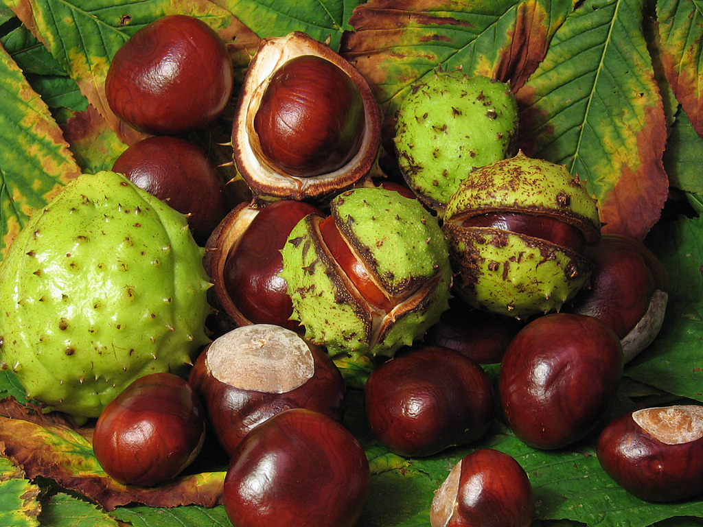 Chestnuts benefit lower back and leg pain - Ping Ming Health